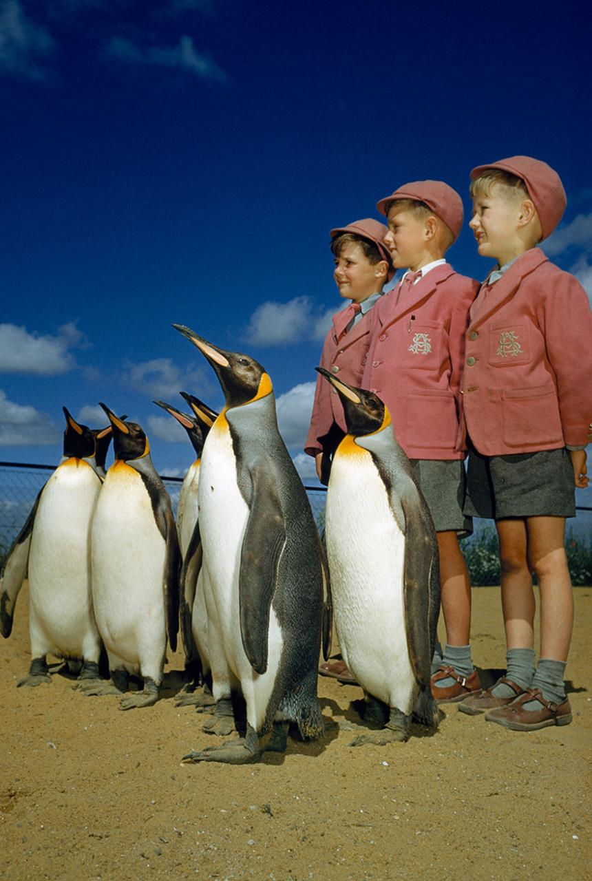 Picture 18 of Feel the beauty of life from 25 unpublished photos of National Geographic